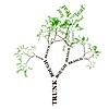 Tree Application