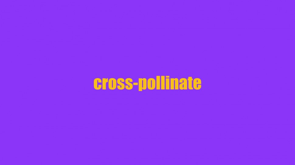 cross-pollinate